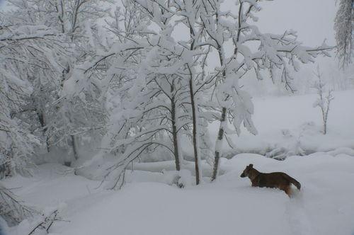 2008 12 15 Kapy qui avance dans la neige