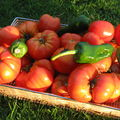 Concassee de tomates