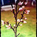 Semaine 12: le printemps