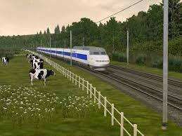 train et vaches