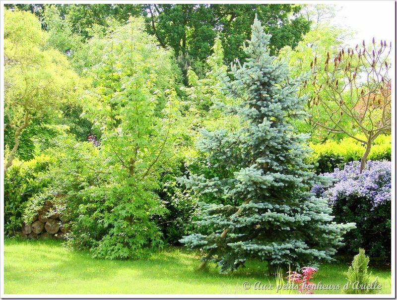Mon jardin vu de ma fenêtre (16)