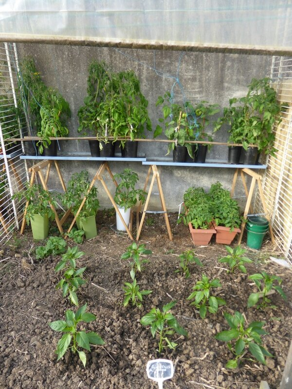 9-potager ouest (3)