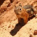 J9-Bryce Canyon_53