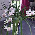 Orchidee en pleine fleurs