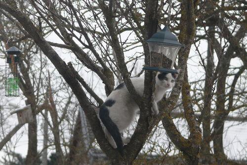 2008 12 31 Domino le chat devant le mangeoire à oiseaux