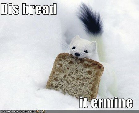 funny_pictures_ermine_eats_bread