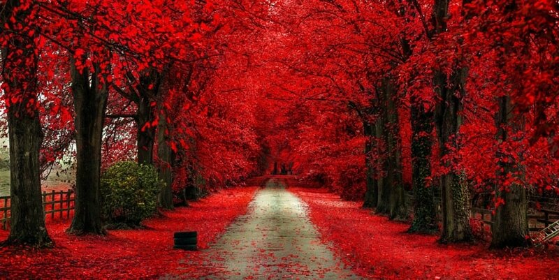 Une des plus belle photo 2014 chemins d'arbre rouge