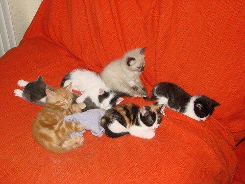 2008 04 21 Six chatons