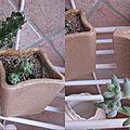compo cactus 4