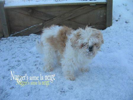 Neige mardi 7 février 2012 avec Nugget's 004