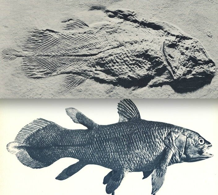 coelacantheFossileActuel ph 1