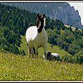 un magnifique cheval
