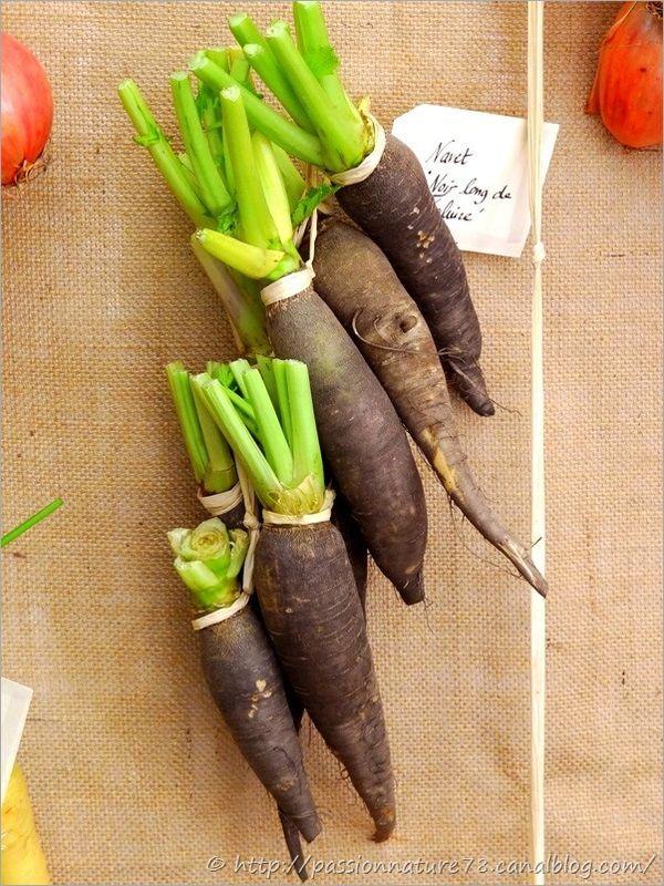 Les légumes d'autrefois (19)