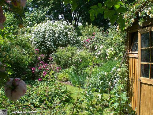 Autour de la cabane de jardin au toit végétalisé…