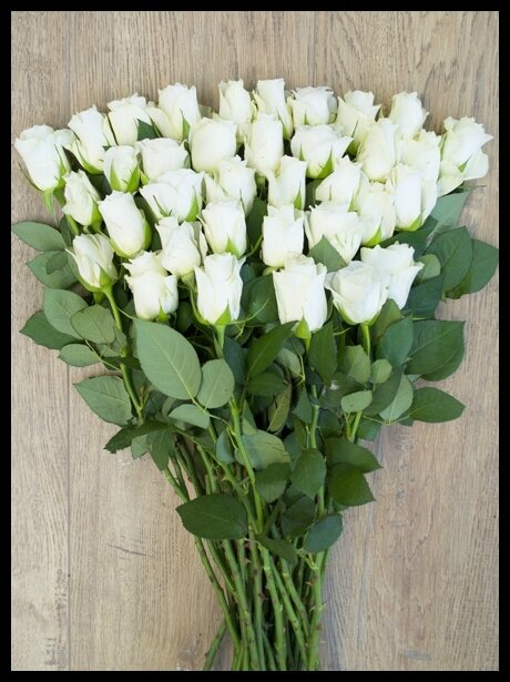 bloom s roses blanches akito