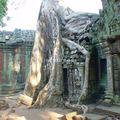 site d'angkor_ta prohm_09