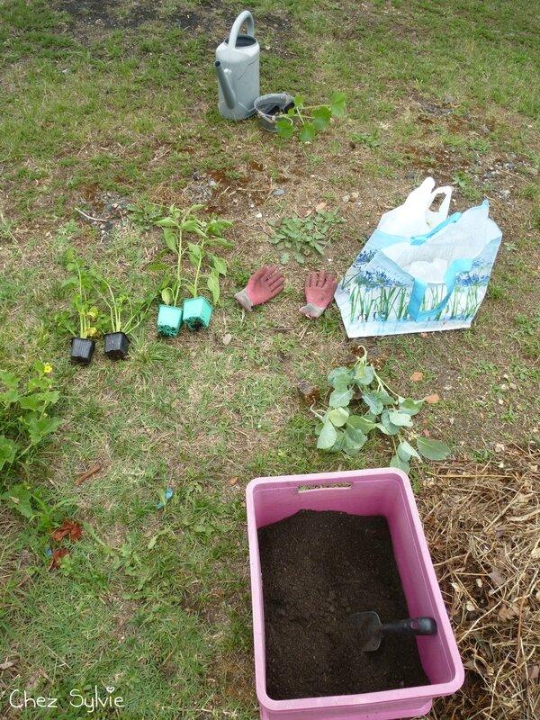Potager permaculture 3e butte plantations 01