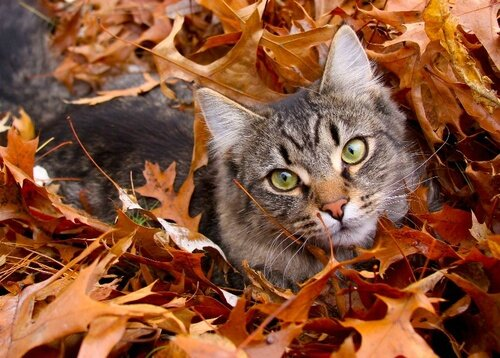 chat automne feuille