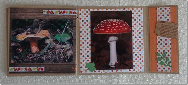 mini-champignons-(8)