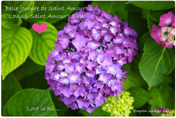 a saint amour