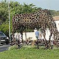 2011 07 11 Grabels (Hérault (1)
