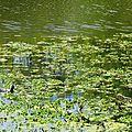 Lac d'Agès 29041636