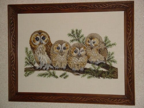 famille chouettes