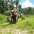 treck eleph DSCN2201