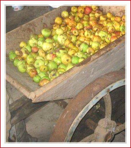 pommes broyage