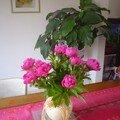 Un bouquet de pivoine