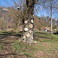 24 - Marcasse Terril-blement Nature - 20130420_25