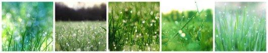 green-grass-640x128