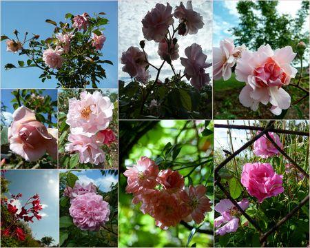 Fleurs 2013 juin3