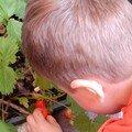 En rentrant à la maison....on y trouva...nos 1ères fraises de la saison