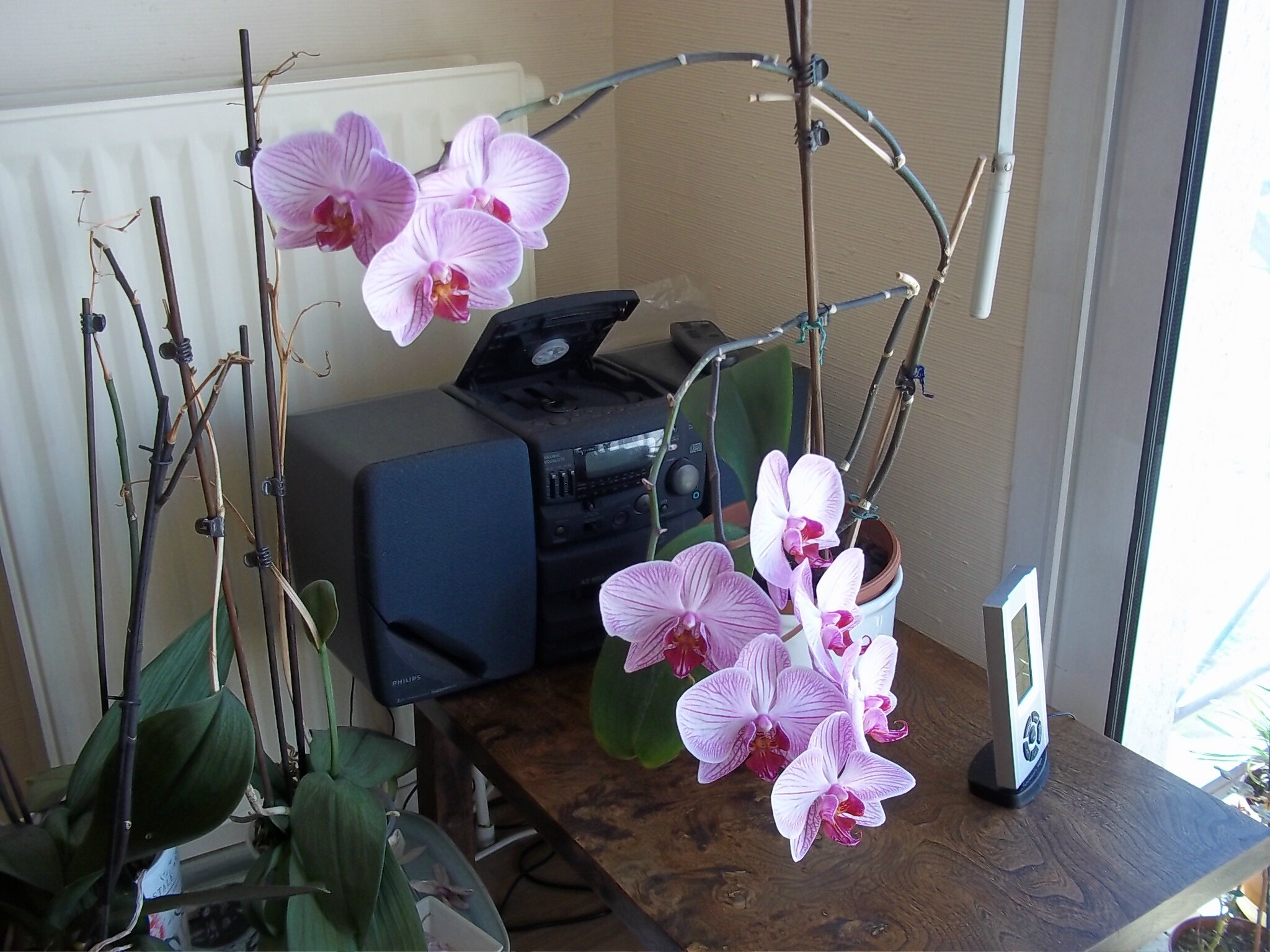 cata chez les orchid es 80alattaque. Black Bedroom Furniture Sets. Home Design Ideas