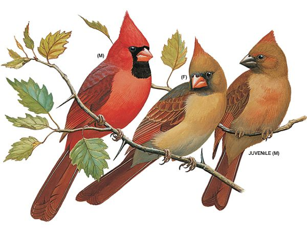 Flying bird wallpaper draw
