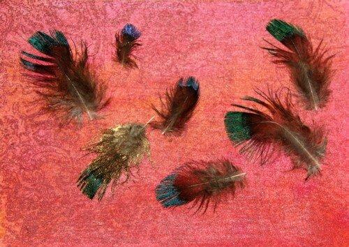 Echange plumes 5sur6
