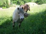 poneys_170511_007