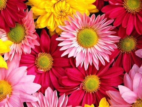 fleur lafouine012