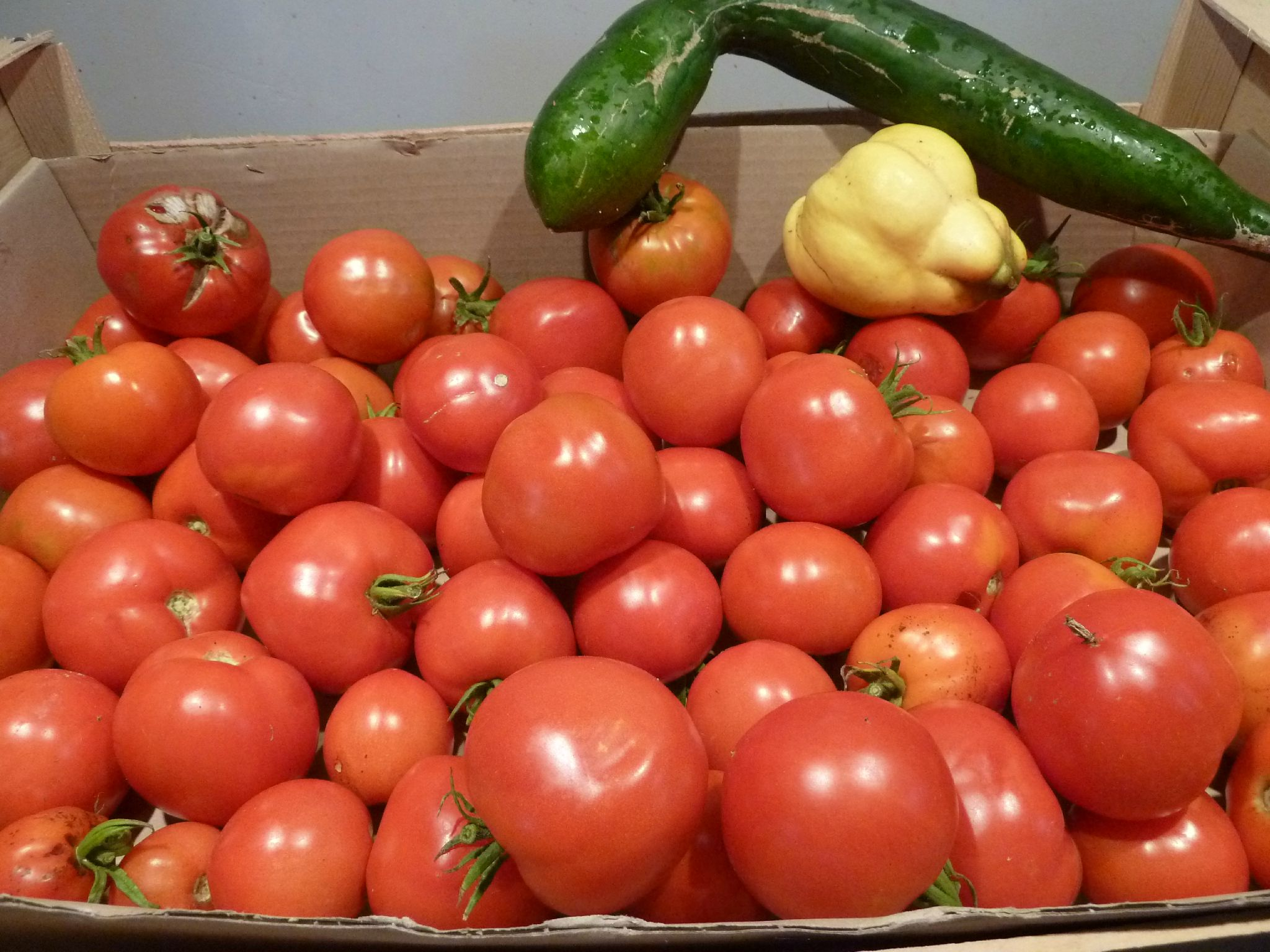 tomates, coing, concombre - www.passionpotager.canalblog.com