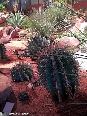 Cactées, succulentes