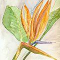 Page 33 Oiseau du Paradis