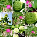 fleurs de s villes