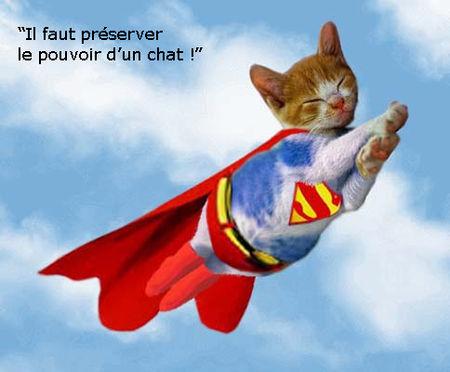 pouvoir_dun_chat
