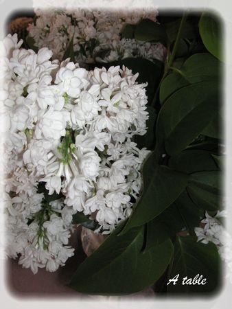 lilas_blanc_034_modifi__1