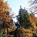 Feuillages automne 07121518
