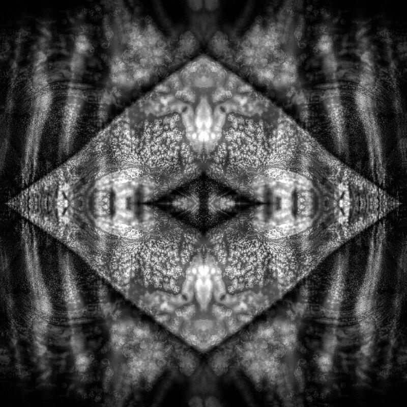 les-4+medusetiragesanscalquesweb