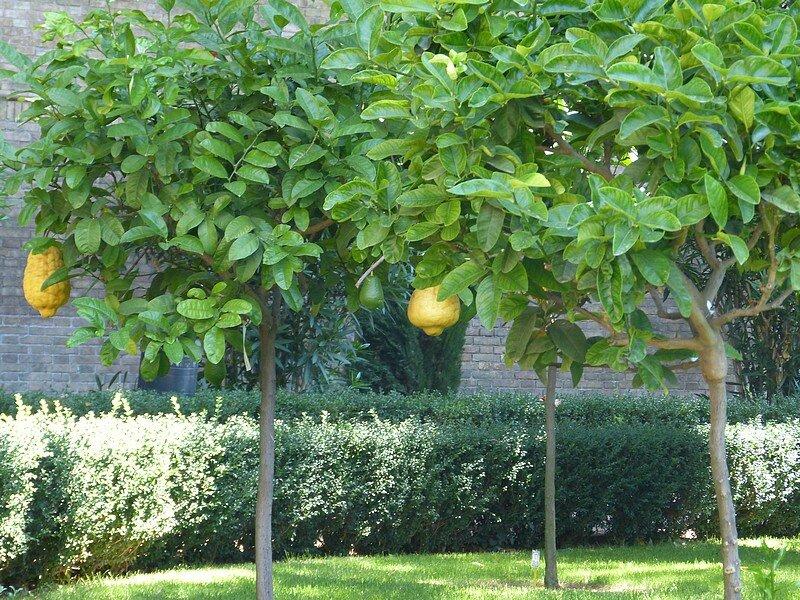 jardins villa F1