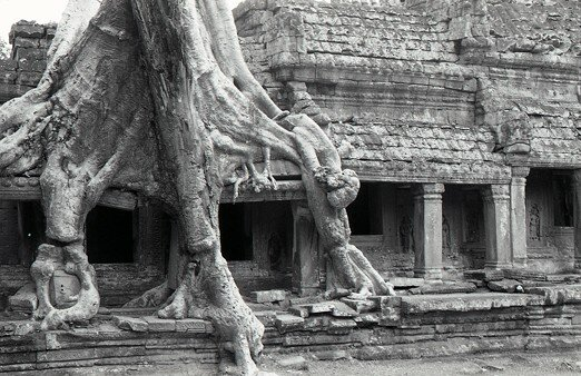cambodge_angkor_arbre_ecrase