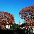 Feuillages automne 07121520
